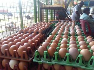 Egg village story 1