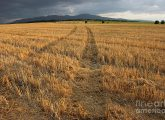 dry-field-road-in-the-countryside-kiril-stanchev