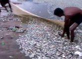 dead-fish-madurai-temple_650x400_71473067221