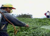 Pesticides5