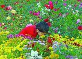 oru-kunju-mutham-flower-show