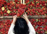 A costumer get a strawberries basket at the Eataly food market store entrance in the former Smeraldo teather downtown Milan