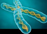 gene_expression_640x318